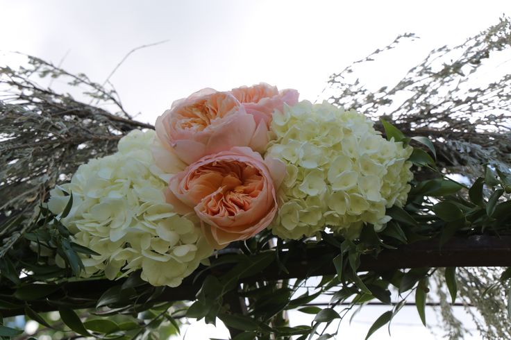 Juliet Roses and Hydrangeas