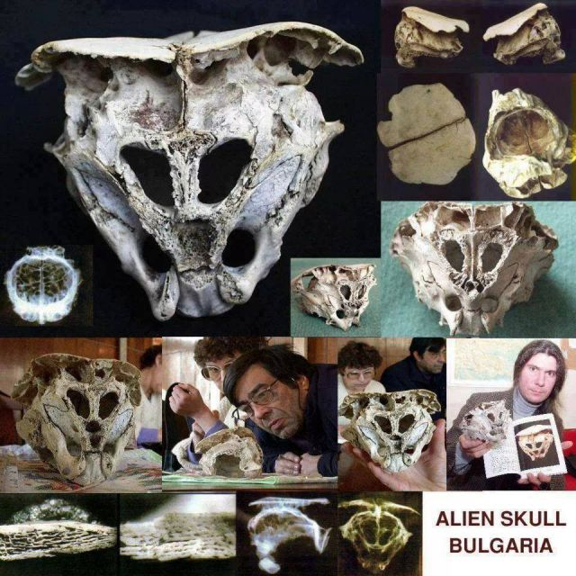 Bulgarian Skull Found in the southern Bulgarian Rhodopes on 21/05/2001. He has the size of a baby head.6 holes in it,and none since where one must suspect the mouth.Thinner and lighter than bone in humans.