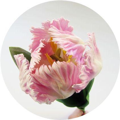 Записи Онлайн Мастер-Класов, проведенных в рамках Школы по созданию цветов из фоамирана (Апрель) :: Основной сайт