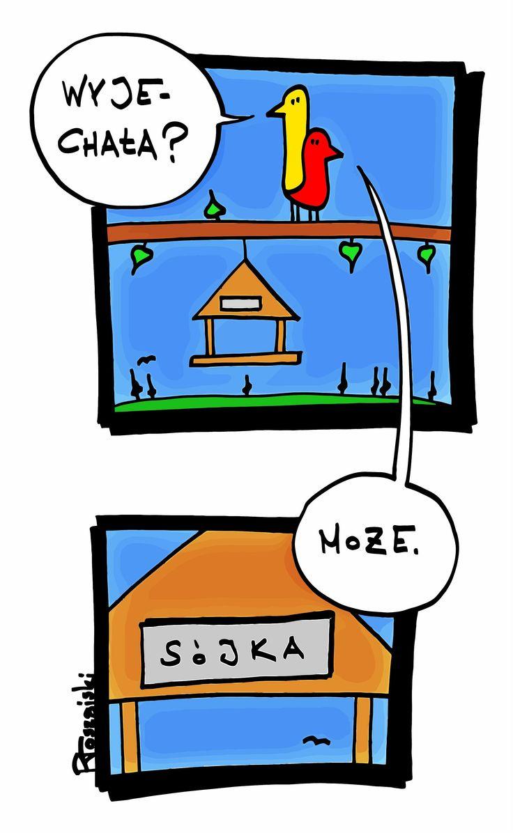 Sójka