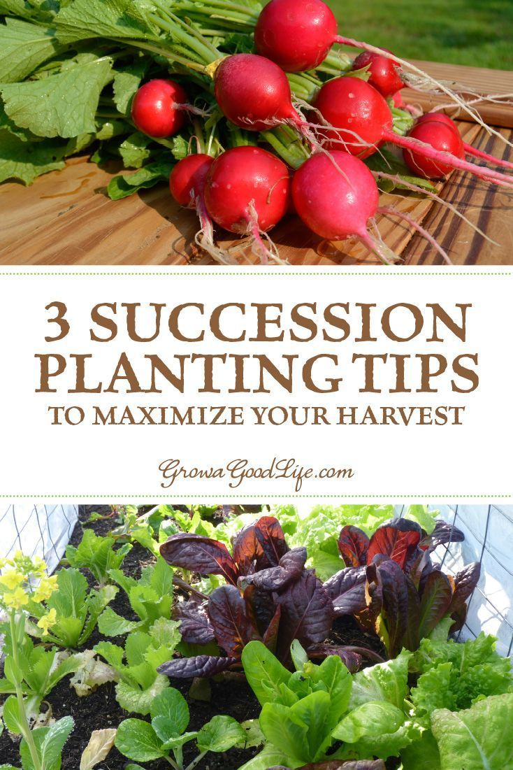 3 Succession Planting Tips To Maximize Your Harvest Vegetable