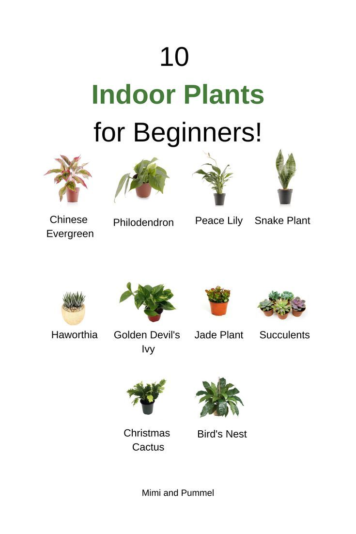 Indoor plants for beginners | modern decor | green | Bohemian decor |