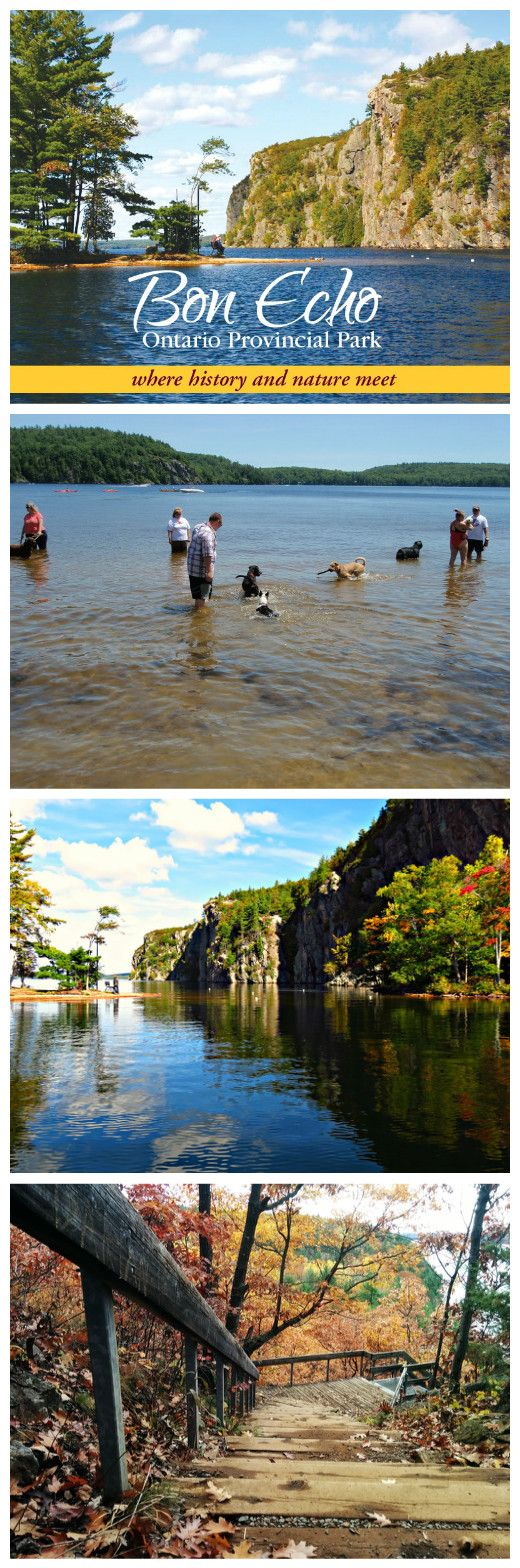 Bon Echo Provincial Park has a dog friendly area and is an amazing park to enjoy for a week or long weekend! Find out more at https://www.ontarioparks.com/park/bonecho  #southcoastvibe #camping #dogs #outdoors #dogfriendly #bonecho #ontario #parks #provincialparks #active #living #livefree #beachlife
