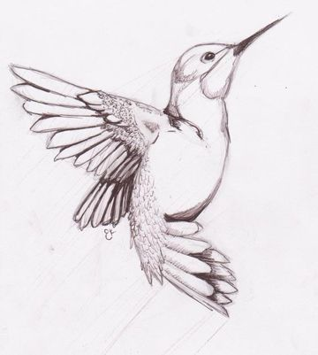 Ms de 25 ideas increbles sobre Colibri para dibujar en Pinterest
