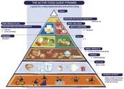 Belgium's pyramid for the Flemish community.  - active food guide. Reproduced with permission.