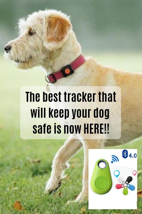 Dog Stuff Dog Toys Dog Trackers Pet Toys Trackers For Dogs