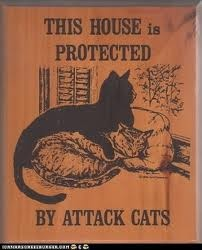 !: Books Jackets, Attack Cat, Funny, Front Doors, Cat Signs, House, Crazy Cat Lady, Kitty, Animal