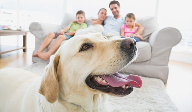 15 child friendly dog breeds