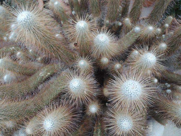 """Cactus at """"Tuincentrum het Oosten"""""""