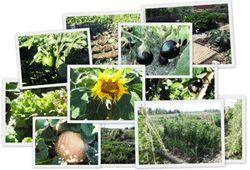 Cómo preparar la tierra para sembrar. Paso a paso
