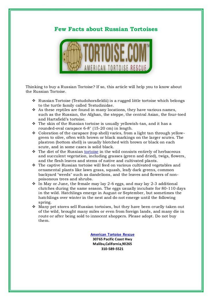 best 20  russian tortoise ideas on pinterest