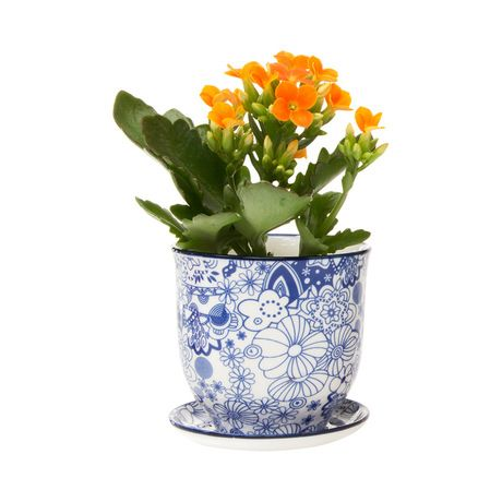 Modeled after classic teacups, this Brighton Pot and Saucer Planter will make a charming addition to your country-style or transitional home. This traditionally inspired design is decorated with delica...  Find the Brighton Pot and Saucer Planter, as seen in the An Artist's Hacienda Collection at http://dotandbo.com/collections/an-artists-hacienda?utm_source=pinterest