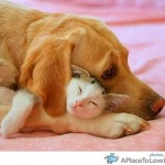 cuteSnuggles, Puppies, Best Friends, Bestfriends, Dogs Cat, Pets, Sweets Dreams, Cuddling Buddy, Animal
