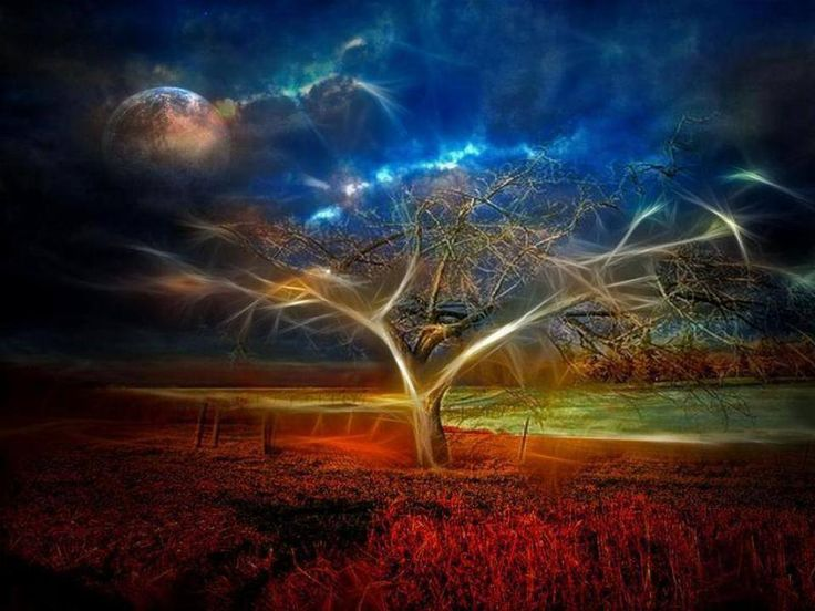 abstract tree hd wallpapers - photo #36