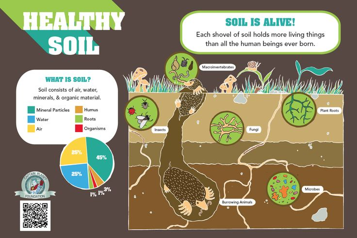 Healthy soil educational infographic for kids all for What is soil for kids