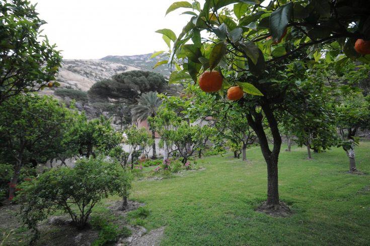 Montecristo, terraferma