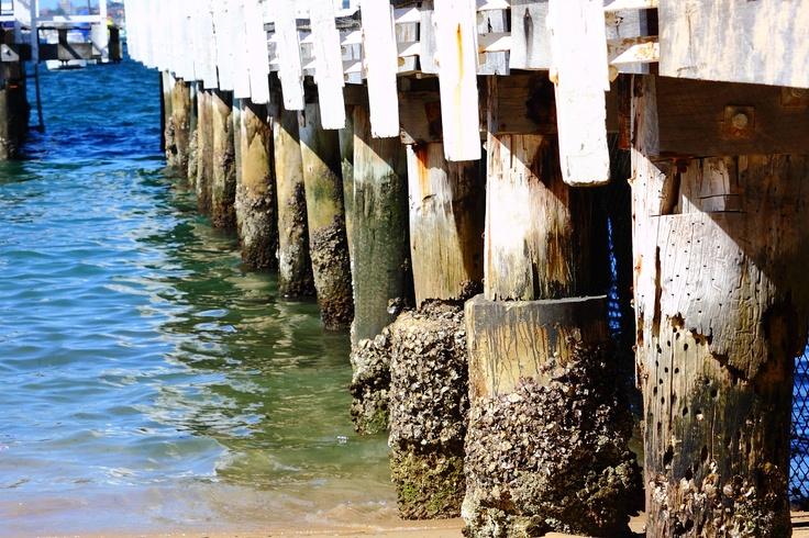 The Wharf Meets The Tide. Summer 2009 @ Balmoral Beach.