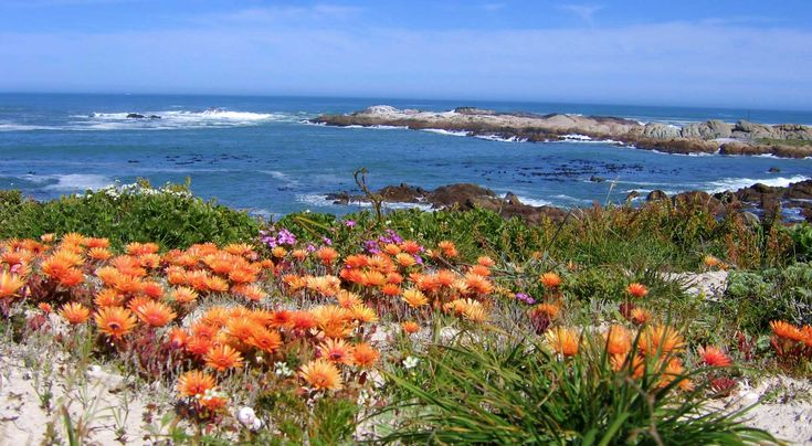 Flowers by the Sea. | CAPE WEST COAST BIOSPHERE TRAILS