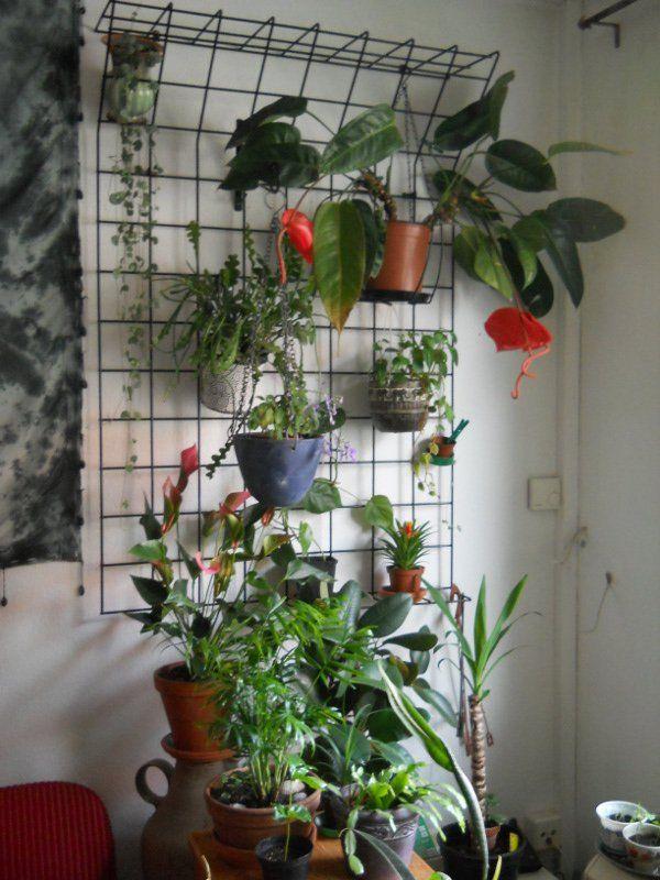 die besten 25 gro e zimmerpflanzen ideen auf pinterest tropische zimmerpflanzen gro e. Black Bedroom Furniture Sets. Home Design Ideas