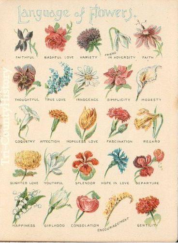 language+of+flowers+plate.jpg 368×501 Pixel