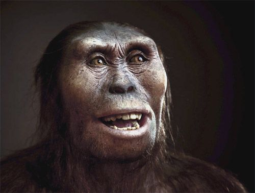 Posterior a este, se encuentra el Australopithecus afarensis: homínido extinto que vivió entre los 3,9 y 3 millones de años atrás. Era de contextura delgada y grácil, y se cree que habitó solo en África del este. La mayoría de la comunidad científica aceptó que puede ser uno de los ancestros del género Homo.