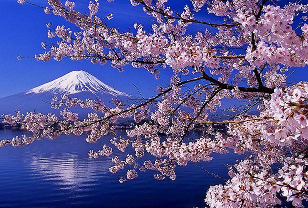 [Mt,Fuji from Lake Kawaguchiko] – 山梨・河口…