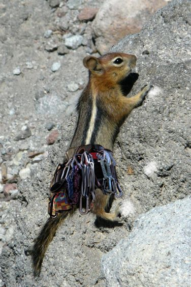 A little break to the usual pictures of rocks... climbing chipmunk. :-)