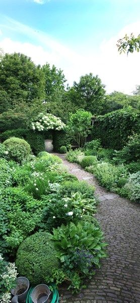 Green and white garden