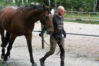 Minkun Matkassa: Hevosten laitumellelasku