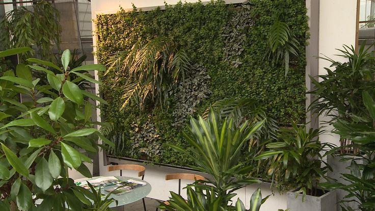 Ein grüner Teppich in der Vertikalen statt Zimmerdschungel. Pflanzenwände sind ein faszinierender, sauerstoffspendender Blickfang.
