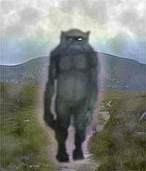 494 best Cryptids images on Pinterest - 47.8KB