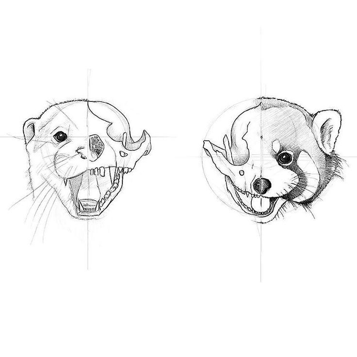 As I said I'm trying to make them look a little bit more like each other... Step by step! . . #otter #redpanda #skull #skullillustration #tattoosketch #tattoodesign #tattooart #tattoo #tattooartist #ink #inktober #illustration #illustrator #bones #skeleton #skulltattoo #art #instaart #artist #instaartist #artistsoninstagram #animal #nature #curiosity #sketchoftheday #wip #picoftheday
