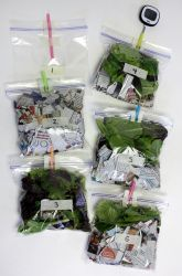 """""""What makes the best compost?"""" science experiment"""