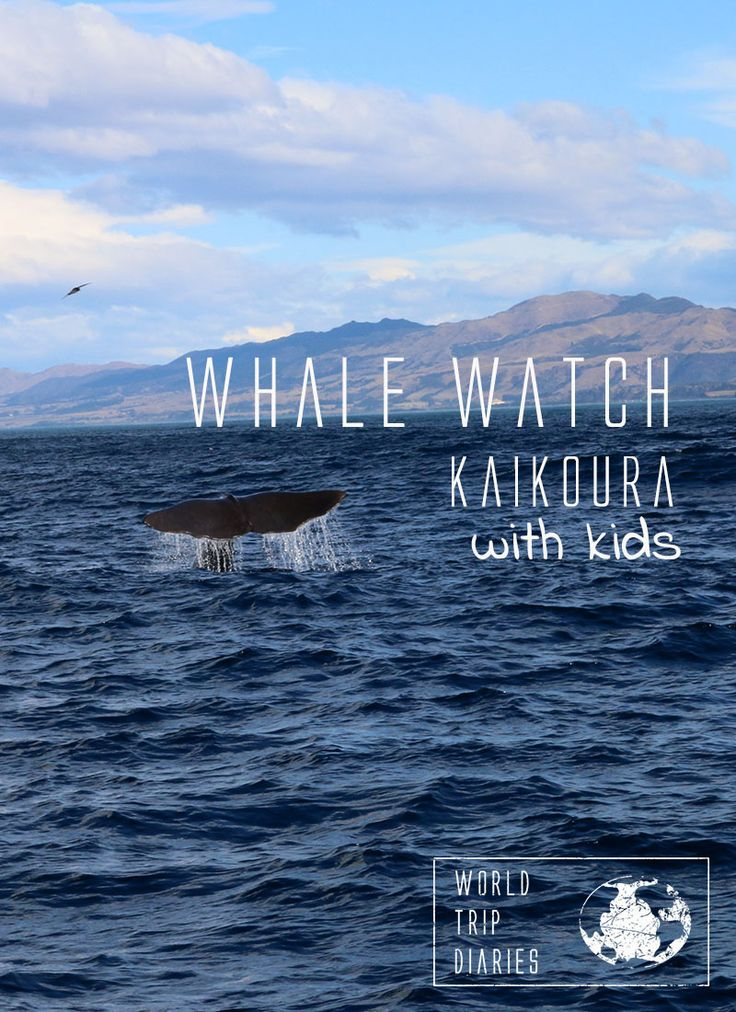Our review of Whale Watch Kaikoura with kids. - World Trip Diaries