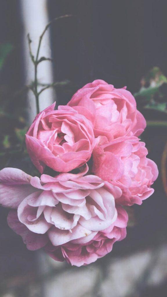 29 Romantic Roses Iphone X Wallpapers Iphone Wallpaper Tumblr