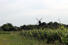 Wind mill by vineyards, Eric Morgat, Anjou