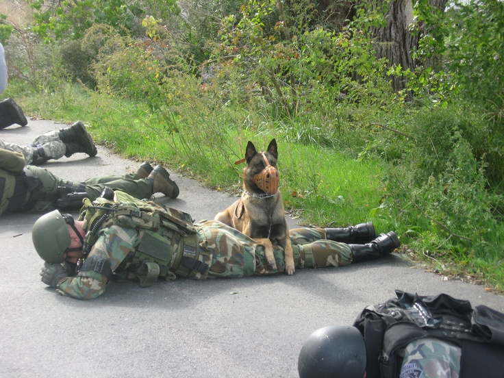 K-9 Swat Team