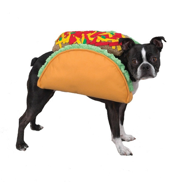 Spicy Taco Pet CostumesTacos Dogs, Mr. Tacos, Tacos Costumes, Bugs Tacos, Casual Canine, Dogs Costumes, Dogs Halloween Costumes, Boston Tacos, Pets Costumes