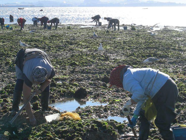 Talleres de Marisqueo en la Isla de Arosa