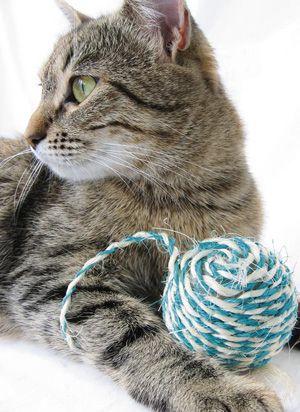 Kit Básico para Gatos. En este post, vamos a hacer un repaso de los accesorios más comunes para tu gato que seguro te facilitarán la convivencia y felicidad con tu minino.
