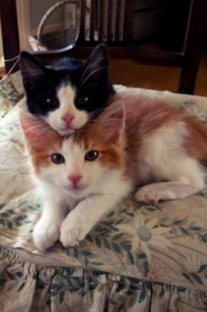 .Clyde, the two-headed cat has been having difficulty after discovering that his top head, Clyde Jr,. is a complete asshole....