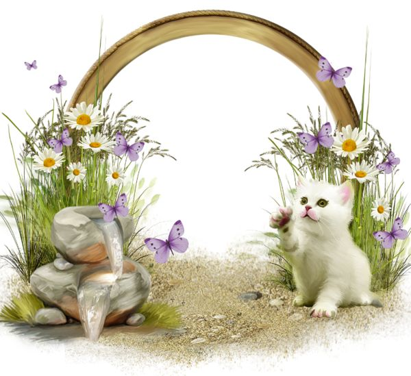 cute transparent frame with white kitten