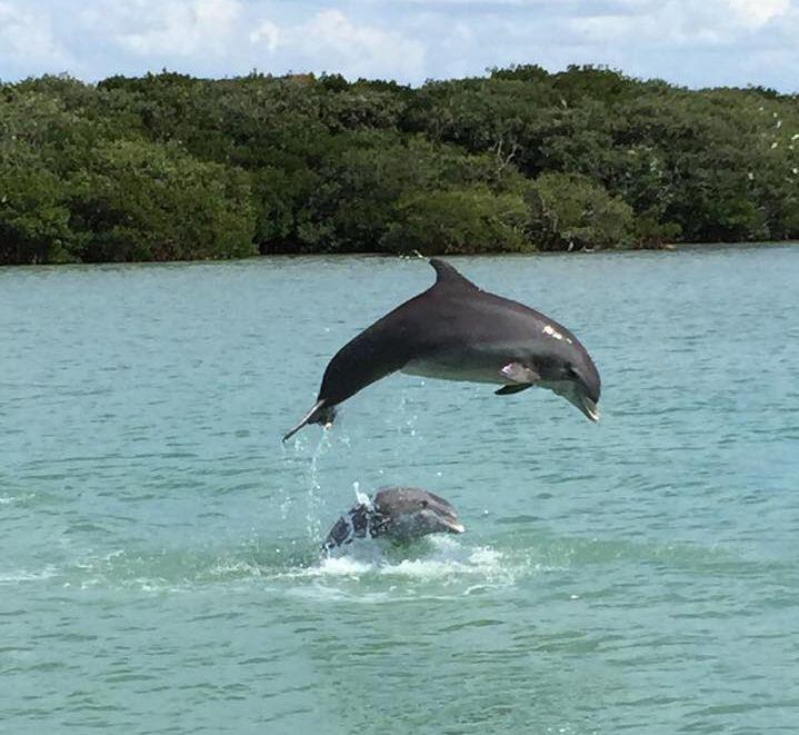 Best 25 deep sea charters ideas on pinterest deep sea for Dolphin deep sea fishing