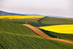 Shooting Box Spring Green Fields Czech Moravia Stock Photos ...