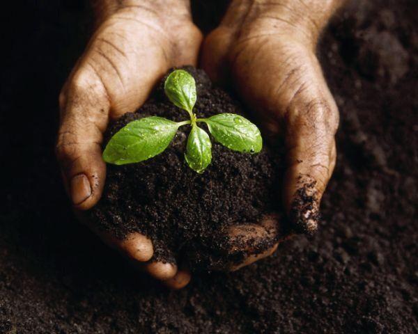 """Il miglior #fertilizzante che possiate trovare è quello fatto da voi: lasciate uno spazio all'angolo del vostro #orto per la compostiera, mettetevi tutte le sostanze organiche di rifiuto e poi usate tale """"composto""""."""