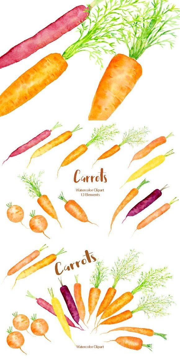 Watercolor Carrot Illustration In 2020 Carrots Vegetable Design