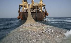 Deep Sea Fishing - The Guardian