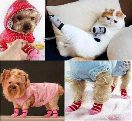 meias antiderrapantes sapatos passeio cães gatos animais m