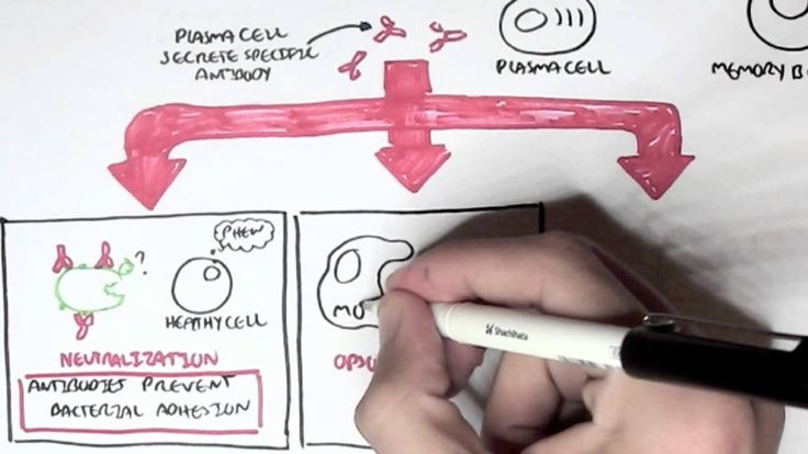 Immunology - Adaptive Immune System