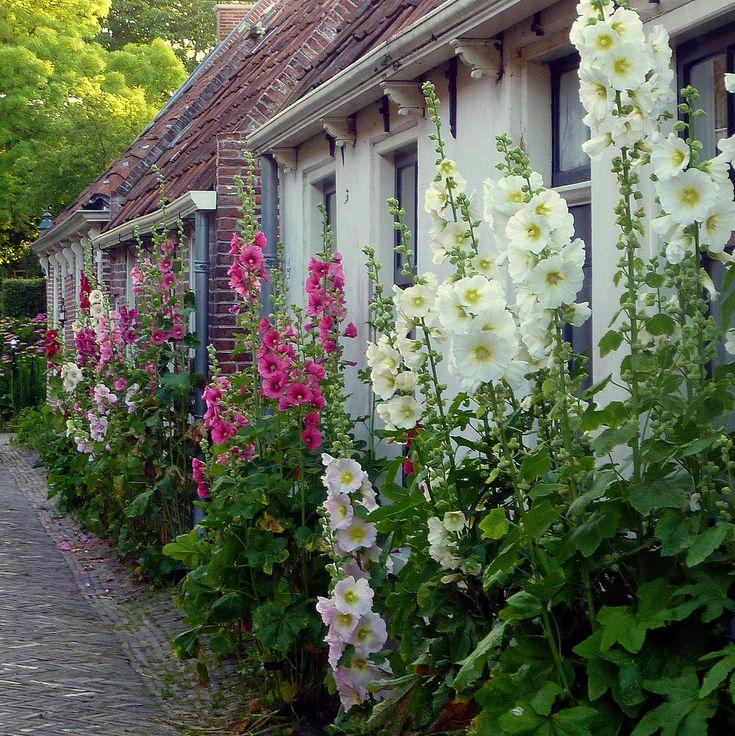 petitpoulailler:vintagehomeca:Hollyhocks in Garnwerd (Groningen - Netherlands) by Noorderland